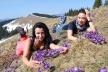 Цвітіння крокусів у Карпатах приваблює чимало туристів (Фото)
