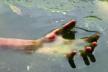 На Богородчанщині в річці виловили тіло чоловіка
