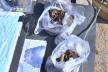 На Прикарпатті розкопали дитячі рештки часів Галицько-Волинського князівства (Відео)
