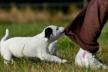 На Тисменничині у собак виявили сказ