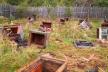 У селі на Рожнятівщині ведмідь розтрощив вулики (Фото)