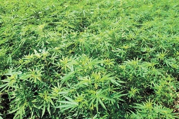 На Рогатинщині в пасажира легковика правоохоронці знайшли наркотики