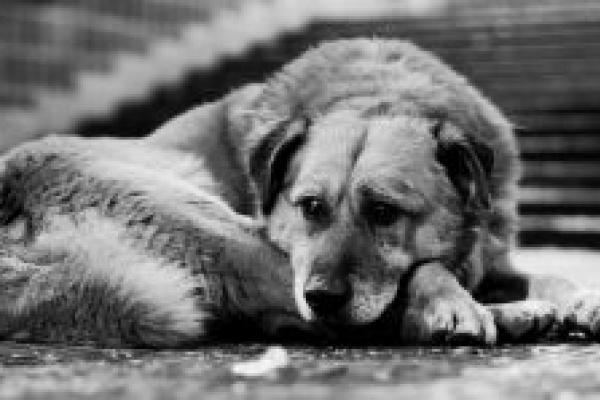 На Прикарпатті масово отруюють собак. Люди вимагають знайти вбивць