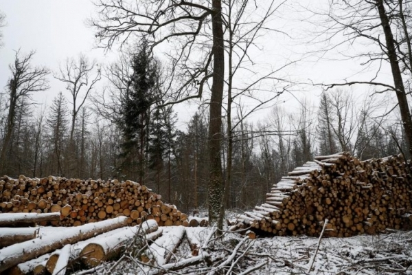 На Івано-Франківщині директор лісгоспу продав собі лісу на 2 мільйони гривень