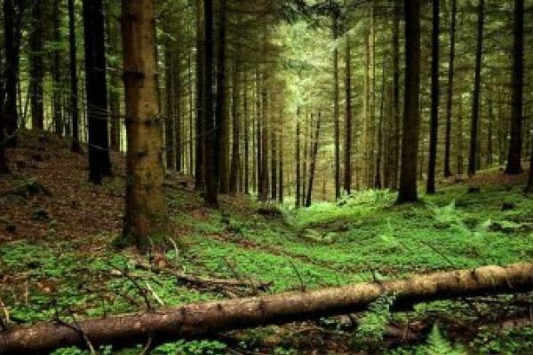 Шістьом прикарпатським підприємцям надали лісові ділянки в оренду на 10 років