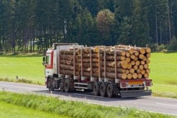 На Франківщині колода з вантажівки ледь не вбила жінку на городі