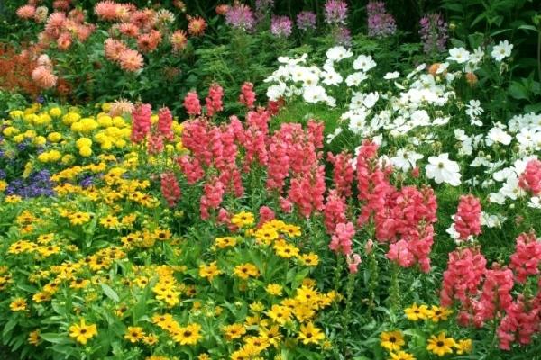 Цієї весни у Франківську висадили вже 33 тисячі квітів, посадать ще 100 тисяч