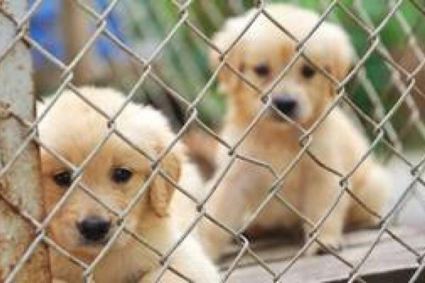 На Франківщині з'явиться притулок для тварин за 34 мільйона гривень