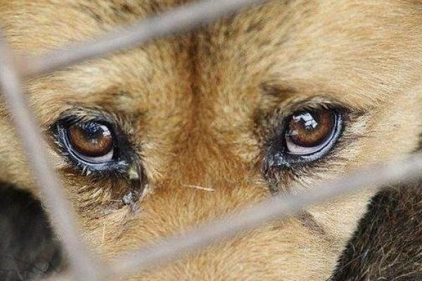 П'ять років у в'язниці проведе прикарпатець, який жорстоко зарубав двох собак