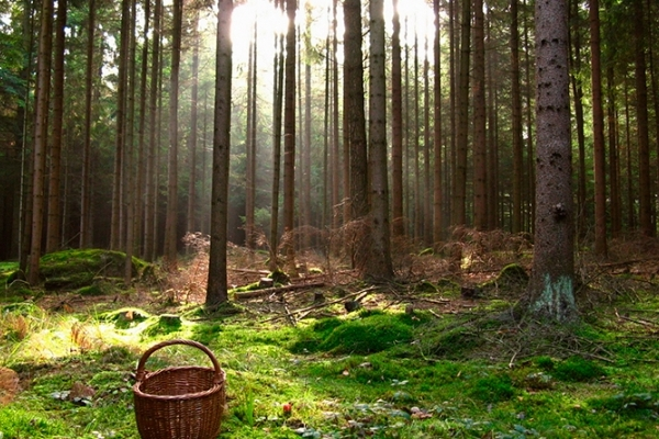 Пішов по ягоди й помер: на Прикарпатті тіло пенсіонера знайшли у лісі