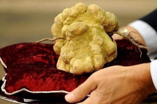 Незвичайна знахідка: франківець відшукав гриб вартістю у 1000 євро (Фото)