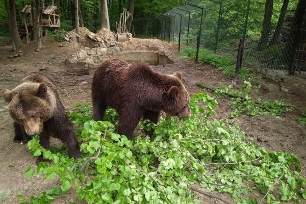 Ведмеді наживо: у Галицькому нацпарку встановили онлайн-спостереження за тваринами (Відео)