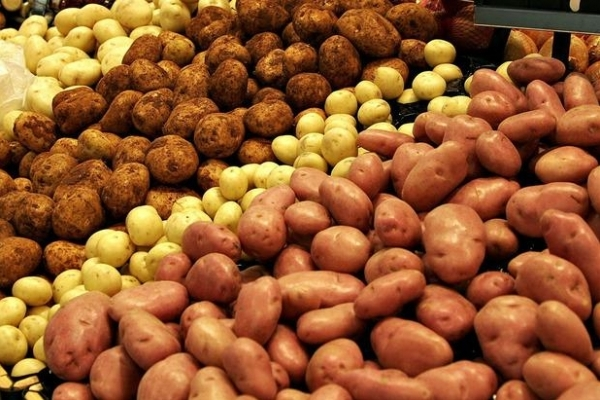 На Прикарпатті виявили рак картоплі