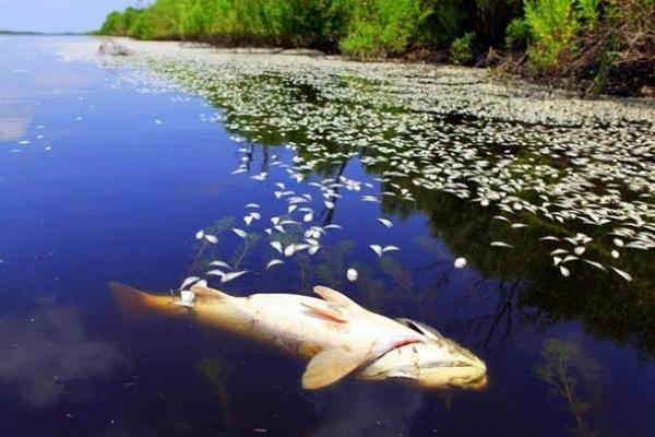 Масова загибель риби у Франківську: воду з озера на Товарній спустять