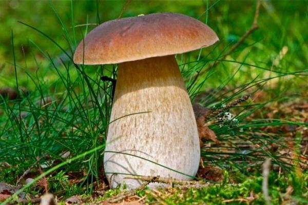 Для 42-річної прикарпатки ласування грибами завершилося реанімацією