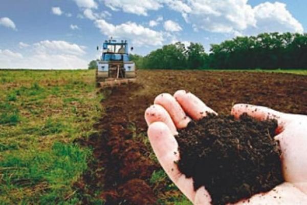 На Прикарпатті сільська рада здала в оренду 12 гектарів не своєї землі