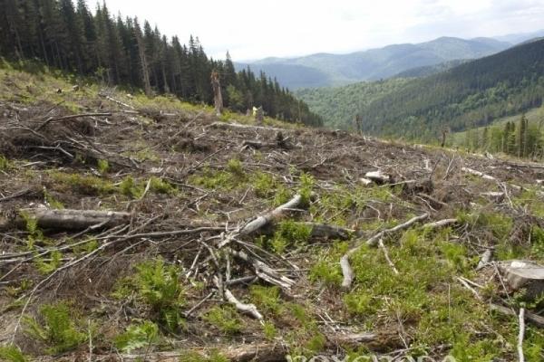 Сільська рада на Прикарпатті захопила 900 гектарів лісів Національного парку «Гуцульщина» (Відео)