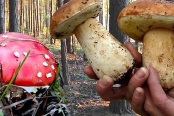 П'ять людей отруїлось грибами в Івано-Франківській області з початку року