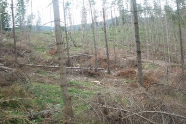 Прикарпатське підприємство заплатить мільйон гривень за незаконну рубку лісу