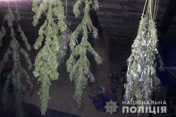 Житель Прикарпаття вирощував у лісі наркотичні рослини