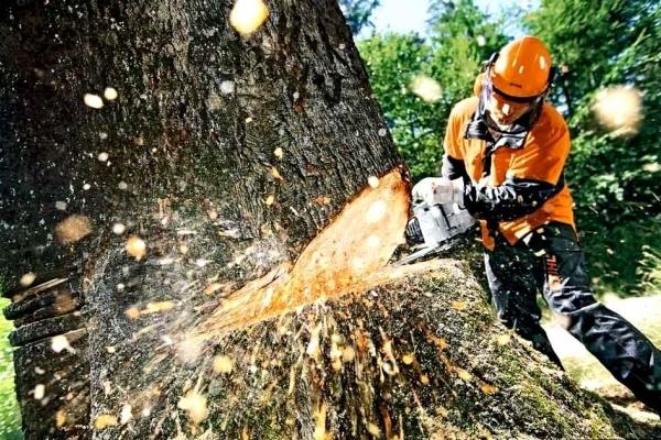 На Надвірнянщині незаконно вирізали лісу на понад 167 тисяч гривень