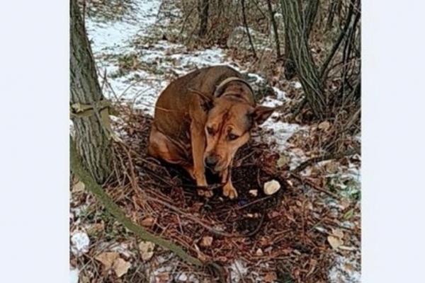 Людська жорстокість. На Франківщині собаку прив`язали дротом до дерева