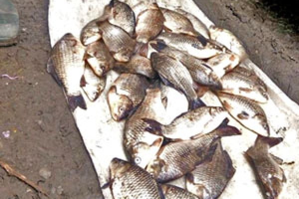 У Бурштині чоловік незаконно продавав рибу в антисанітарних умовах