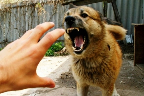 На Рожнятівщині через сказ собаки ввели карантин