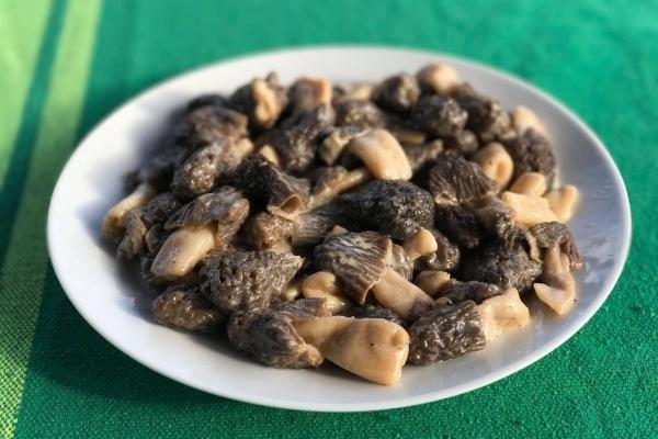 В карпатських лісах з'явилися делікатесні веснянi гриби (Фото)