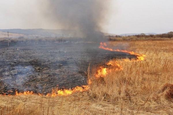 В Івано-Франківську на паліїв трави склали 11 протоколів