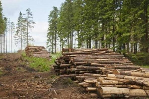 Стало відомо, де на Прикарпатті найбільше рубають ліс
