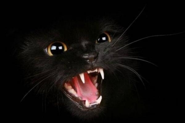На Снятинщині оголосили карантин через сказ кота