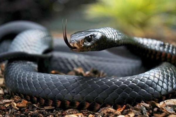 На Долинщині жінка стала жертвою укусу змії
