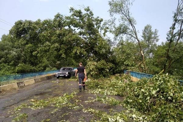 Негода на Прикарпатті – за 20 хвилин вітер повалив десятки дерев (Фото)