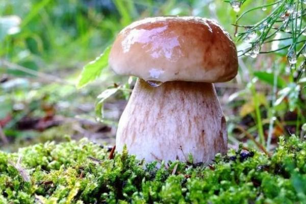 Прикарпатцям радять, як вберегтися від отруєння грибами
