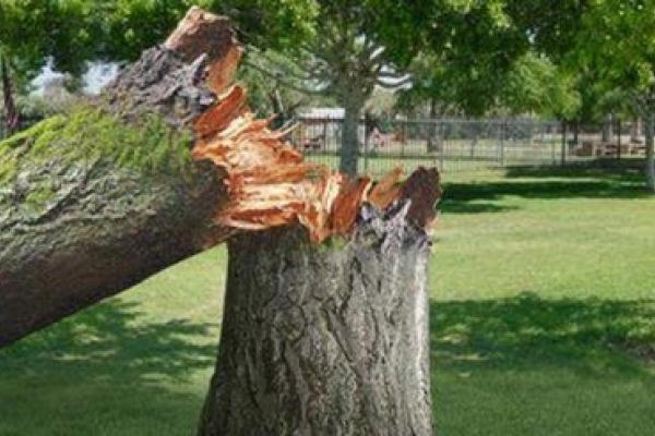 На Яремчанщині чоловіка придавило деревом. Потерпілий помер