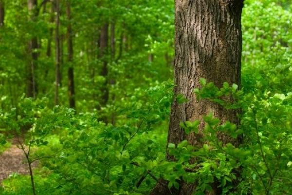 На Прикарпатті у лісі знайшли виснаженою жінку, яка зникла 1 липня