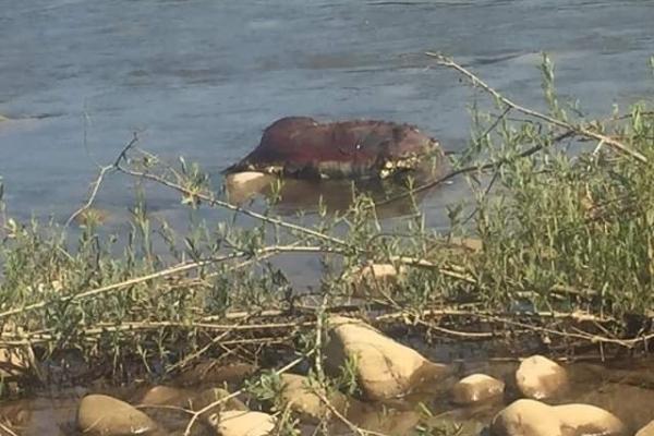 Люди звідти п'ють воду: у Лімниці знайшли труп невідомої тварини
