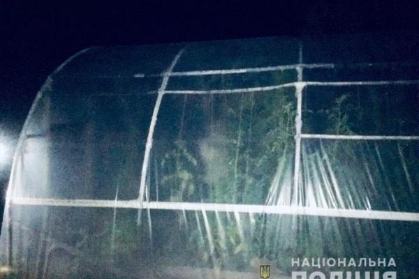 Прикарпатець, який вирощував коноплю, звалив все на маму (Фото)