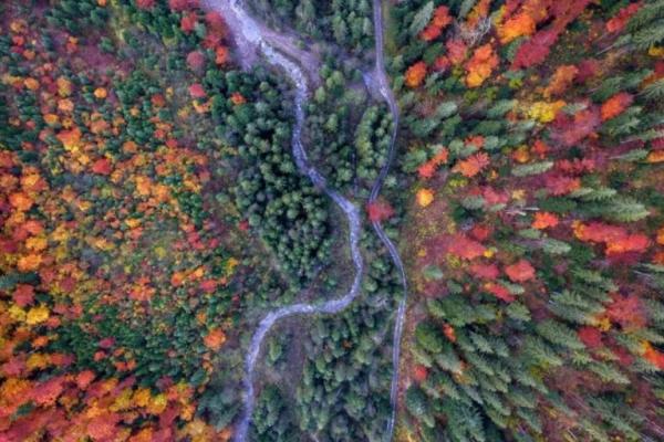 Карпатські праліси можуть стати пам'ятками природи (Відео)