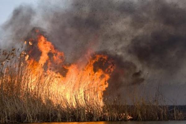 На Франківщині знову масово горить суха трава