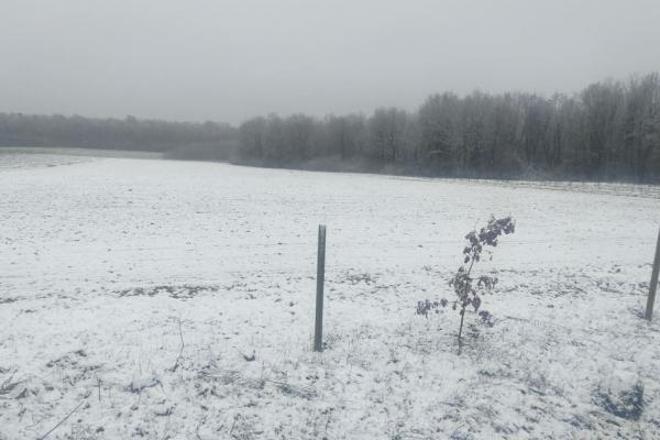 Івано-Франківщину засипало снігом