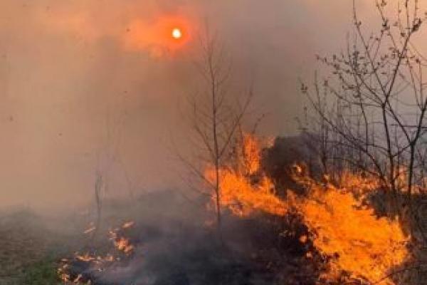 На Рогатинщині підпалили траву: у вогні загинули тварини та птахи