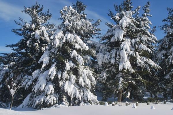 Зима у квітні: Прикарпаття засипає снігом (Фото, відео)