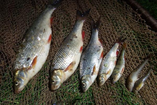 На Франківщині браконьєр наловив риби майже на 24 тисячі. Його затримали (Фото)