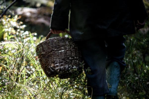 У лісі на Рожнятівщині загубилася жінка – їй допомогли грибники