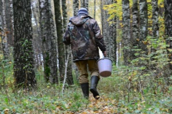 На Прикарпатті пенсіонер пішов у ліс по гриби та заблукав
