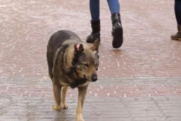 У Франківську масово труять собак