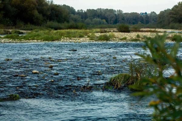 Прикарпатців закликають не купатися в Бистриці через забруднену воду
