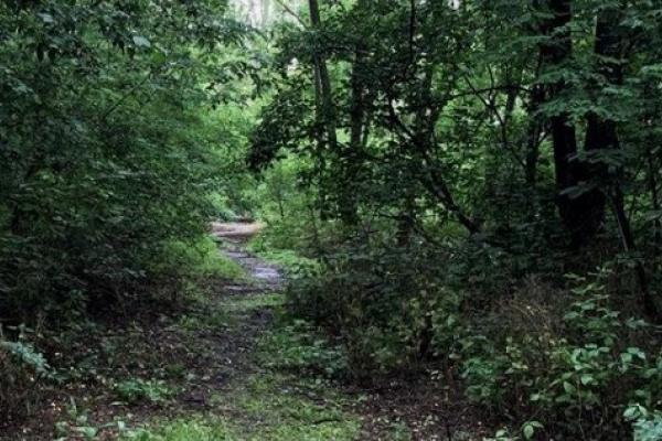 У лісі на Франківщині зник пенсіонер